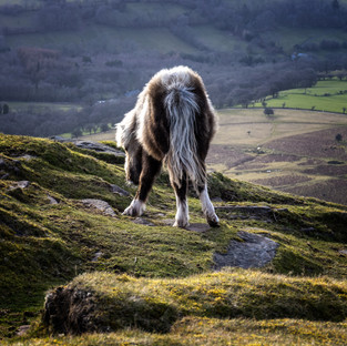 Horses Ass