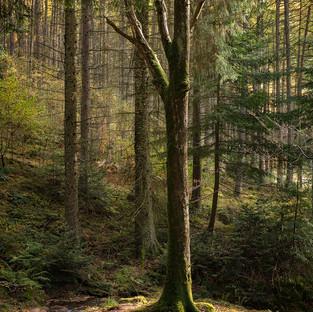 Woodland Scene – Elan Valley