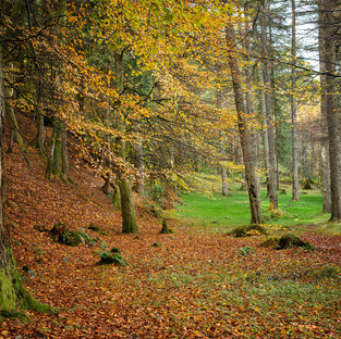 Talybont Forest