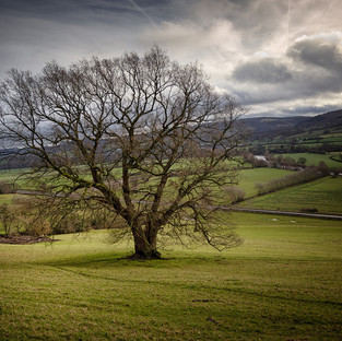 Wye Valley – Winter Oak