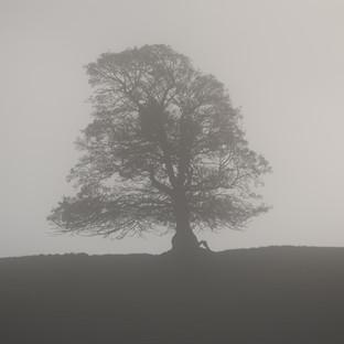 Mist Tree No.3.