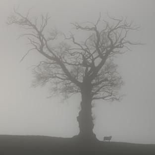 Mist Tree & Sheep