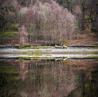 Elan Valley Spring Reflections