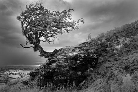 My Favourite Tree - Hay Bluff