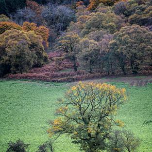 Talybont Autumn Trees
