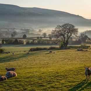 Welsh Lamb