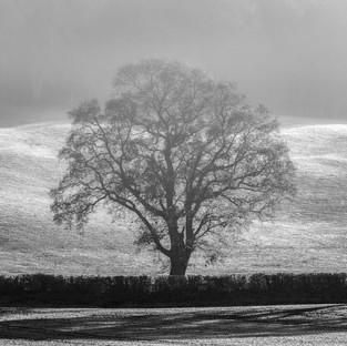 Mist Tree & Frost