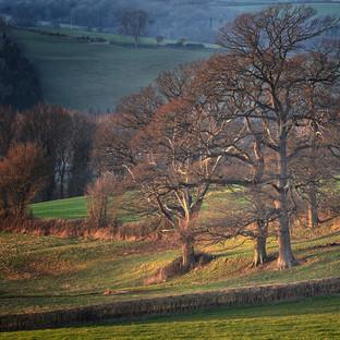 Wye Valley - Clifford