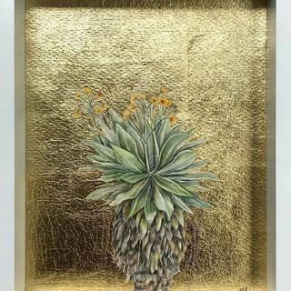 Serie Botánica: Frailejón Páramo del Sol