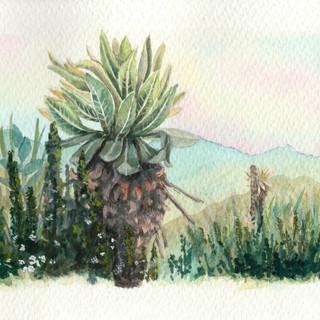 Serie Botánica: Páramo - Fragmento
