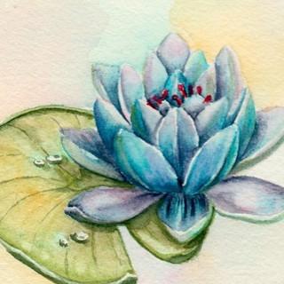 Serie Botánica: Flor de Loto