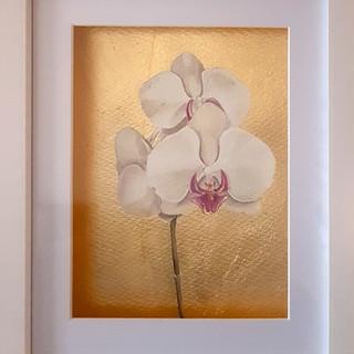 Serie Botánica: Orquídea