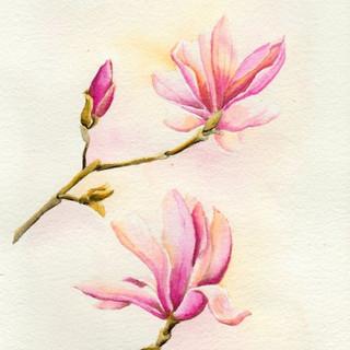 Serie Botánica: Magnolia