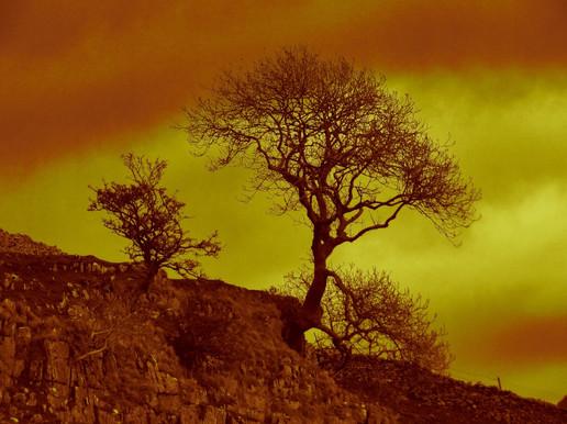 Cumberworth Tree