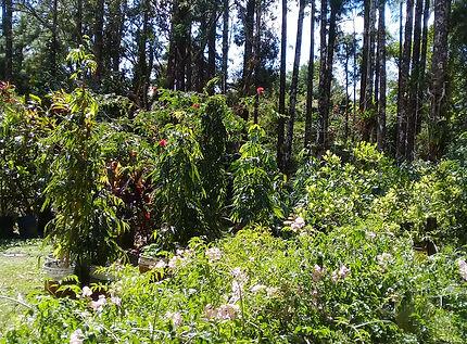 Le Nispero, Vallée d'Anton, centre pour animaux, Panama.jpg