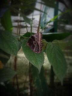 Ferme aux papillons, Vallée d'Anton, Panama.jpg