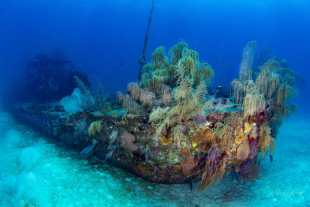 The Doc Poulson is an exciting wreck dive on the West side of Grand Cayman.