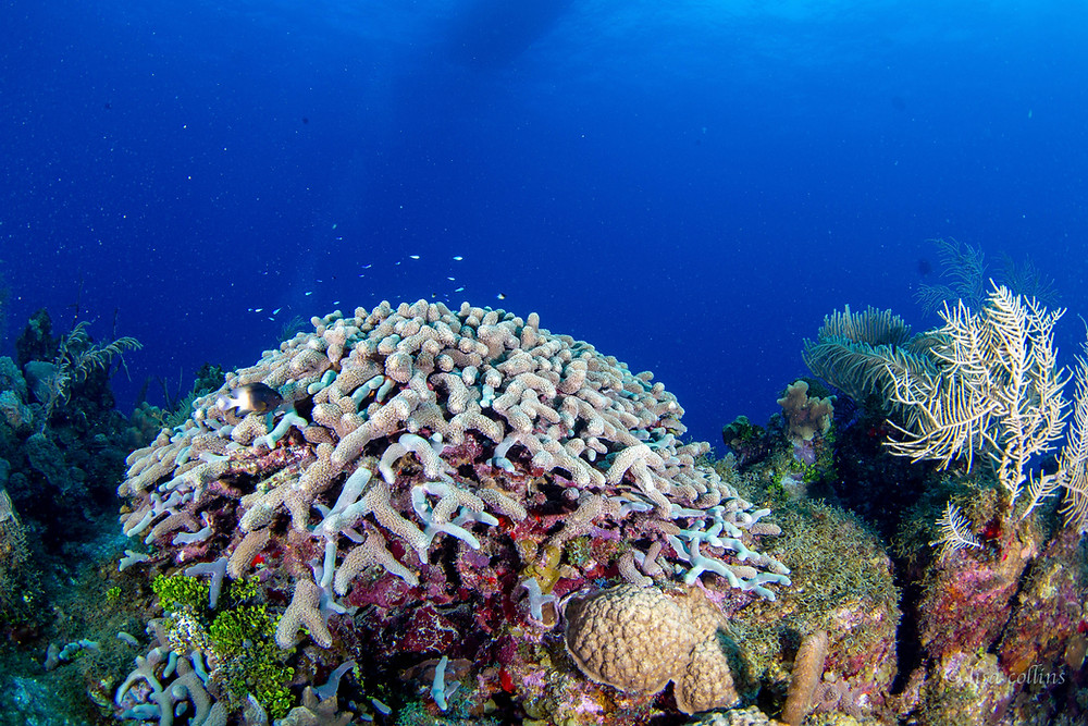 Grand Cayman has amazing dive sites to discover all around the island.