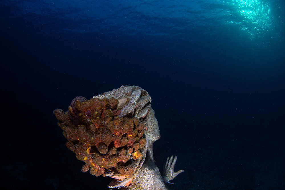The mermaid at Sunset House sites in around 60ft of water, guarding over the reef.  Her hair has amazing reef growth.