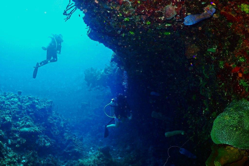 La Mesa dive site can be found on the west side of Grand Cayman, along the Seven Mile Beach area.