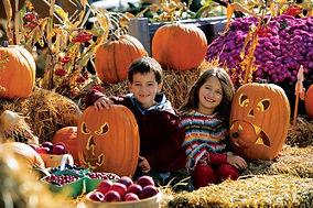 halloween-harvest.jpeg