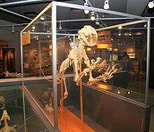 life_sciences_museum_0.jpg