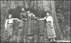 Della tree.jpg