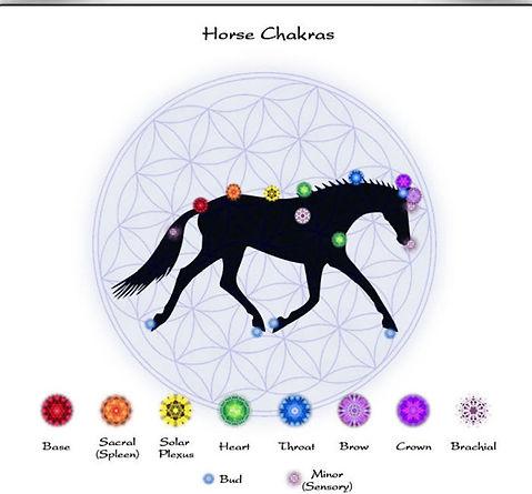 Horse chakras.jpg