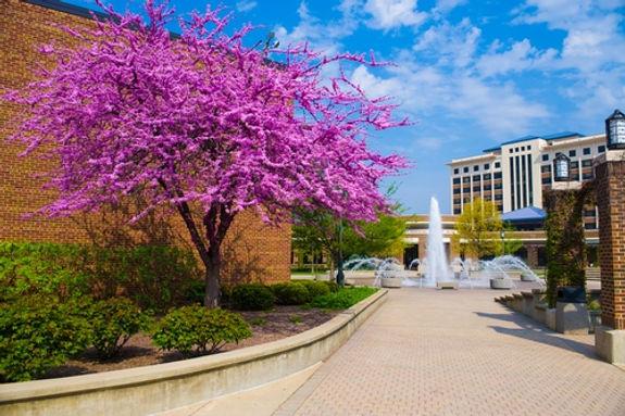 college-photo_11456.jpg