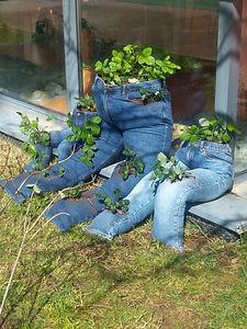 des fraisiers plantaient dans un jean ateliers proposé par en vert et rouge