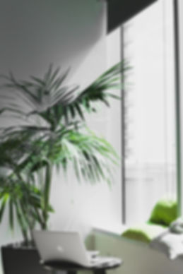 office fern.jpg