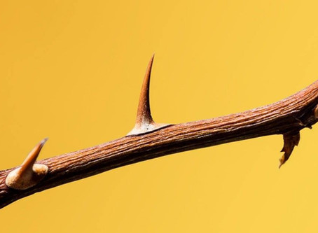 Is your tricky employee a rose about to bloom, or a thorn in your side?