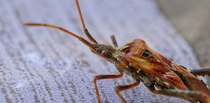 insects-4619045_1920.jpg