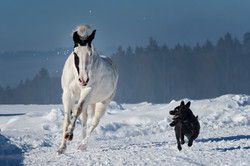 American Painthorse and friend
