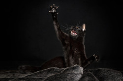 Black little panther