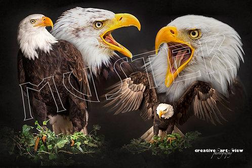 Eulen und Greifvogel Fine Art Print