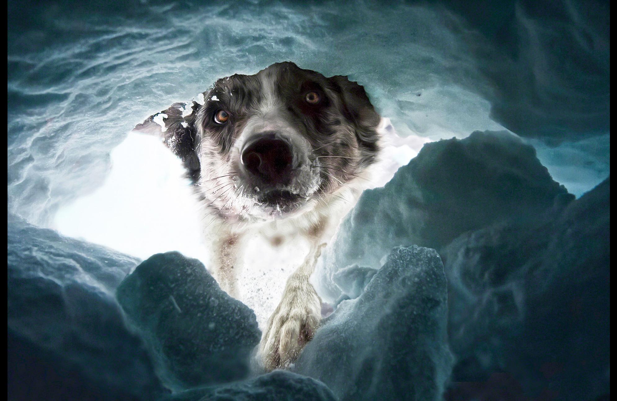 CreativeArtView_RescuedogStart2