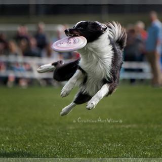 Disc Dog WM 2014