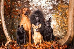 Dog clan
