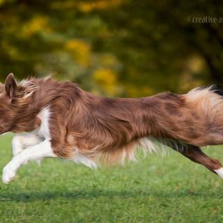 Disc Dog Contest Reusstal