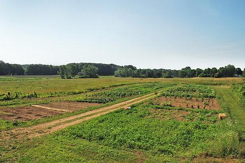 Basic Community Garden Fee