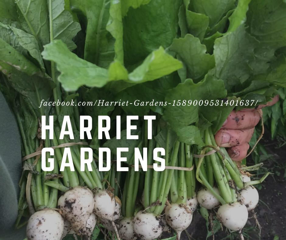 Harriet Gardens