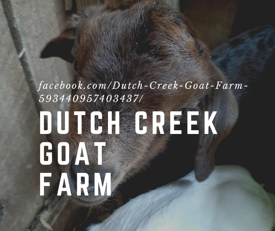 Dutch Creek Goat Farm