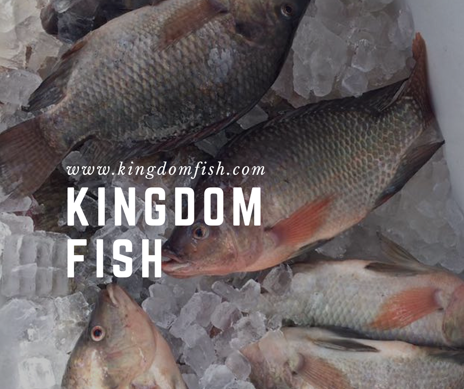 Kingdom Fish