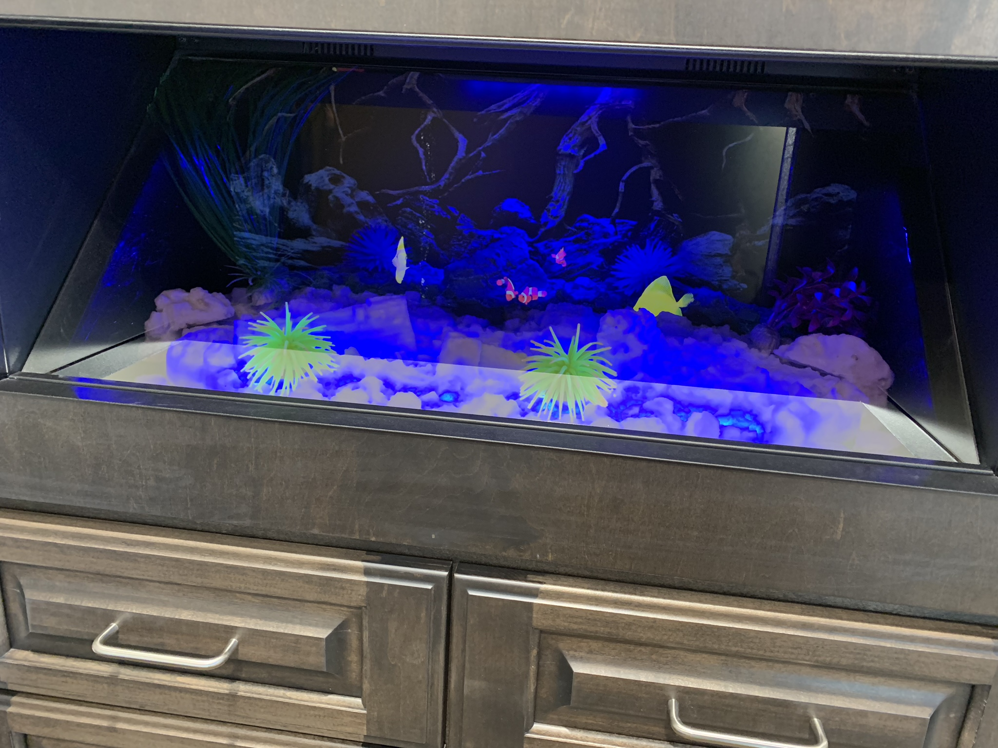 Holographic Fish Tank