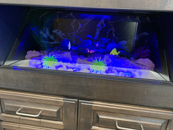 Holographic Fish Tank