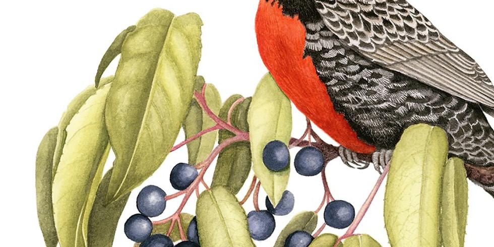 Taller Intensivo de Ilustración Naturalista