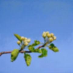 blooming,hyperrealism,oilpainting,blüten,realism,contemporary,switzerland,schweiz