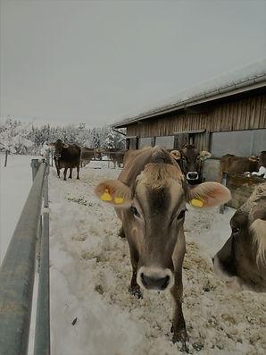 Laufhof im Winter (2).jpg