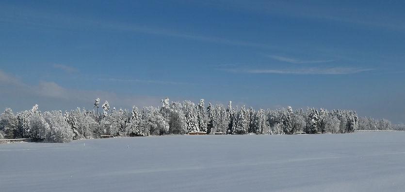Winterbild%2015.01_edited.jpg
